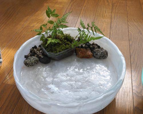 メダカ,ミナミヌマエビ,テーブルアクアリウム,苔玉,レイアウト,水草,浮草