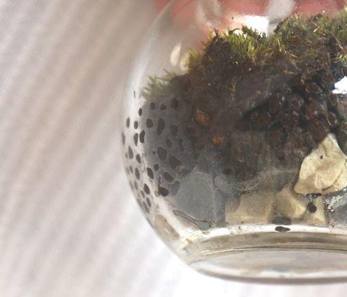 苔テラリウム,100均,キャンドゥ,バブルボール,おすすめ,容器,ガラス